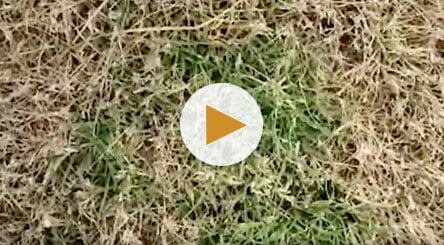 How to Identify and Treat Poa Annua