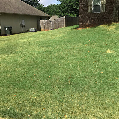 Lawn discolored from henbit and other weeds