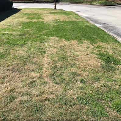 Lawn with clover and brown spots