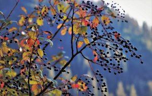 Ornamental tree care for fall