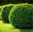 Shrub Fertilization