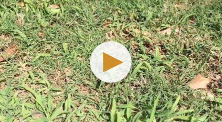 How to Identify and Treat Crabgrass
